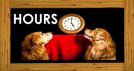 2 dogs looking at a wall clock